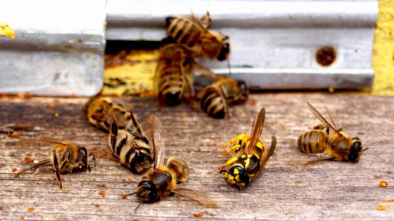 ЕС запретил пестицид компании Bayer из-за его вреда пчелам