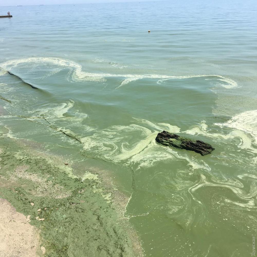 Зелёное Чёрное море. В Одессе зацвел залив